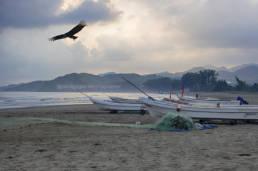 Vulture flies over beach and fishing boats of Roca Partida Veracruz Mexico